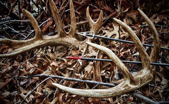 Стрелы для лука, лучные стрелы